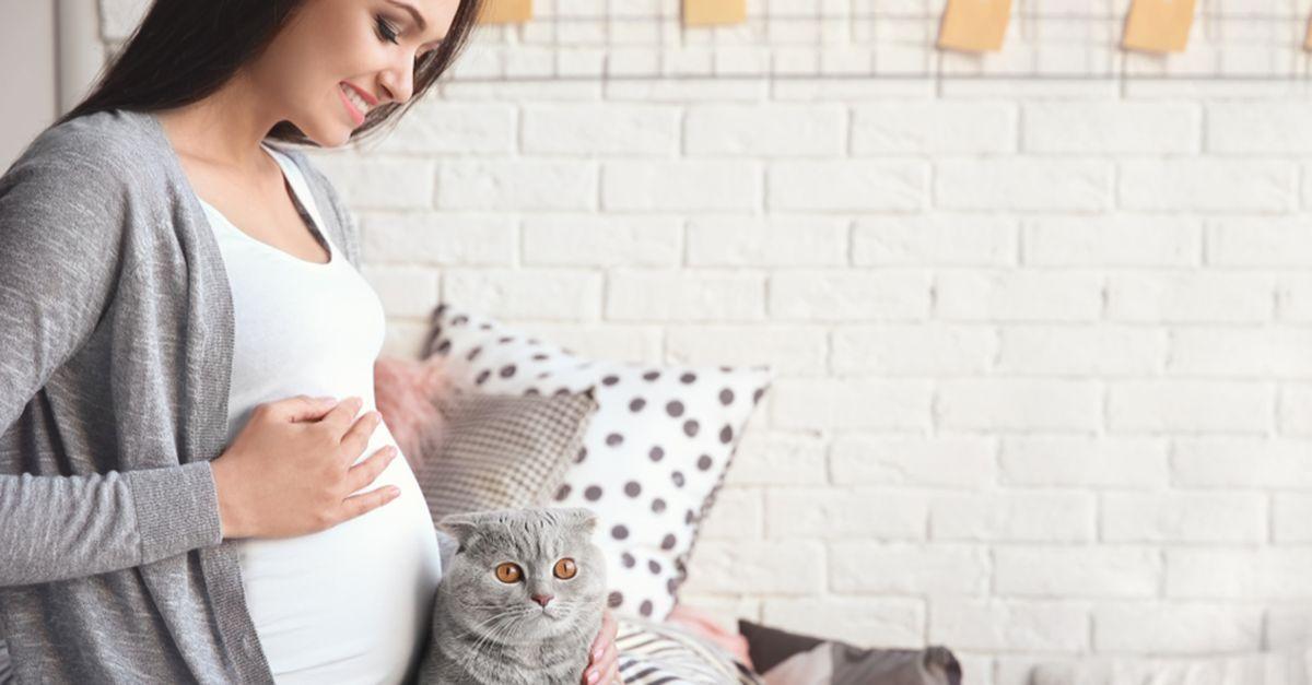 Spüren Katzen Schwangerschaft