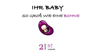 SSW 5 (Schwangerschaftswoche 5)