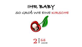 SSW 8 (Schwangerschaftswoche 8)
