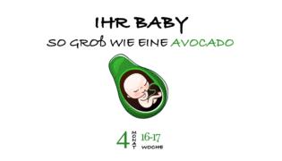 SSW 17 (Schwangerschaftswoche 17)