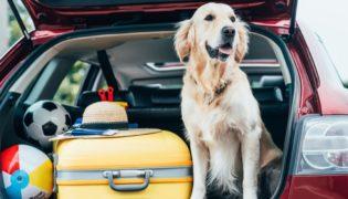 Reisen mit Hund, Katze und Co