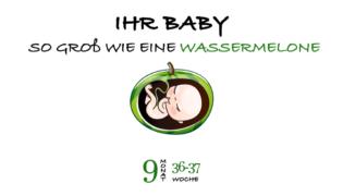 SSW 37 (Schwangerschaftswoche 37)
