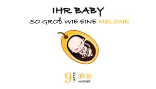 SSW 38 (Schwangerschaftswoche 38)
